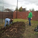 The Gower Telford - Bulb Planting